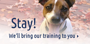 Stay! We'll bring our training to you